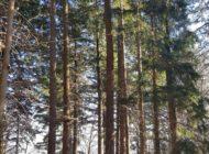 Realizzazione casetta sull'albero per bambini