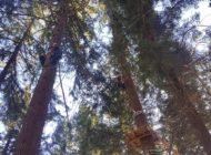 Realizzazione ostacoli e piattaforme tra gli alberi del parco avventura