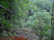 Creazione nuovi passaggi tra gli alberi del parco avventura