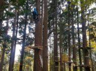 Tree climber al lavoro per installare le nuove piattaforme sugli alberi