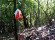 Team Building aziendale tra i boschi