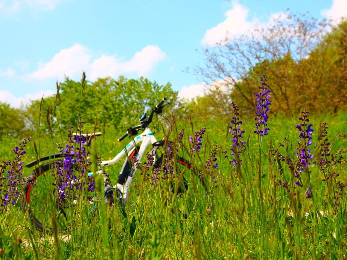 Escursioni in bicicletta elettrica