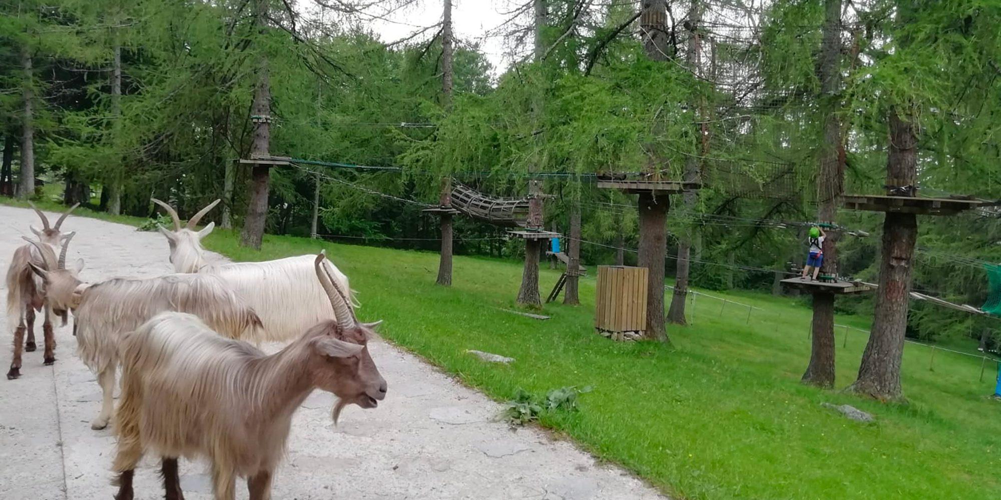 Animali pascolano nel prati di parco