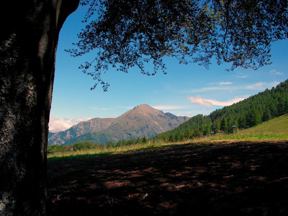 Grandi prati per riposarsi e fare un picnic dopo i percorso tra gli alberi