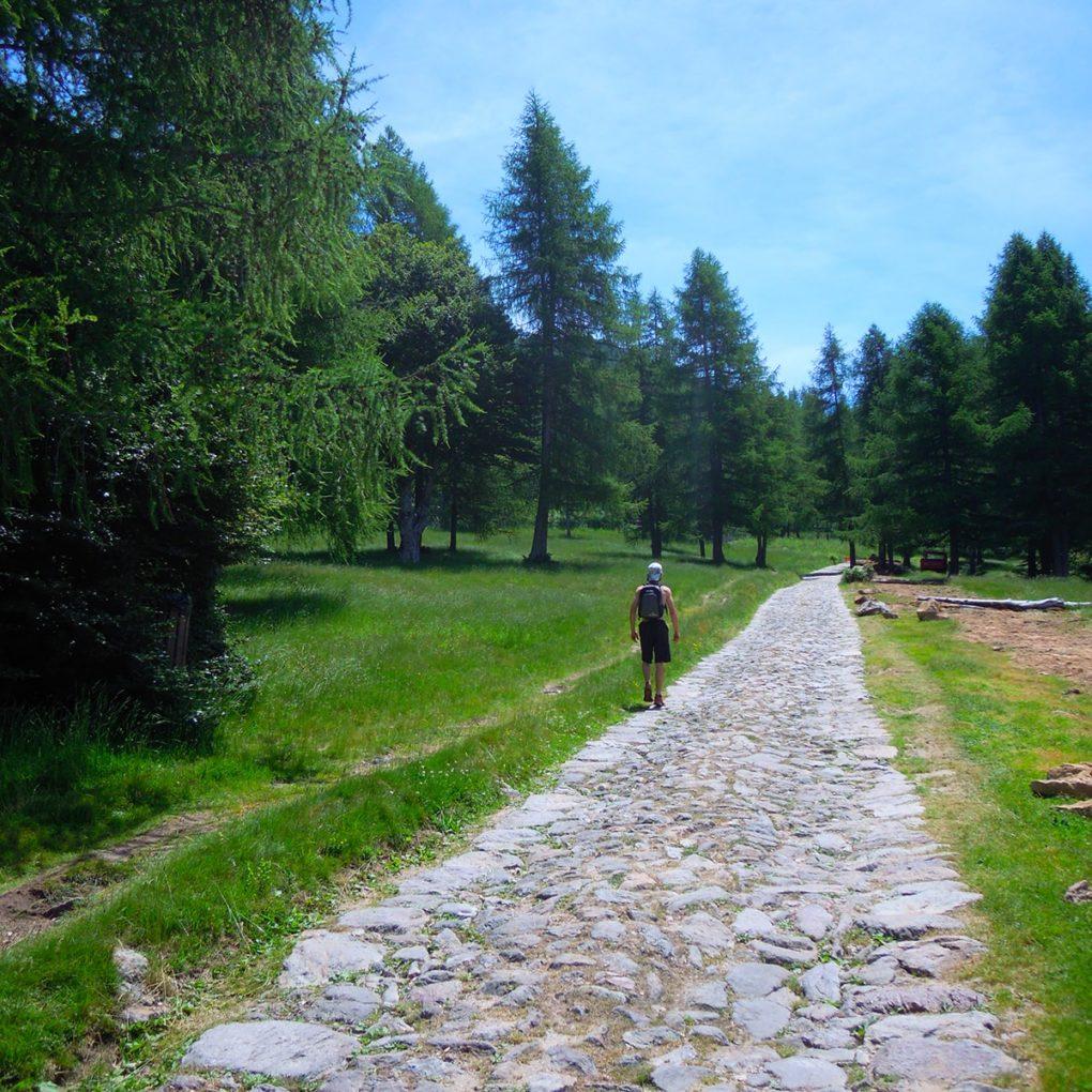 Trekking lungo i sentieri del Pian delle Betulle vicino al Parco Avventura