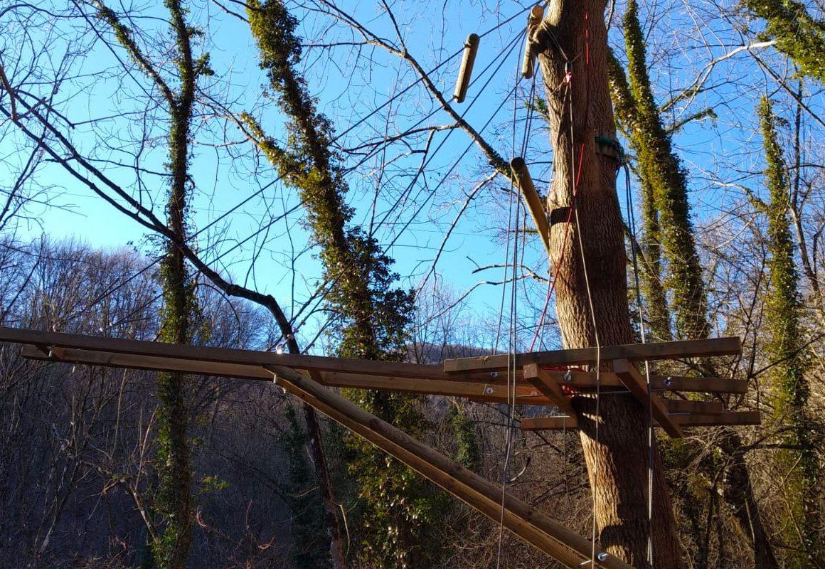 Esperti agronomi curano il Posizionamento di passerelle sugli alberi
