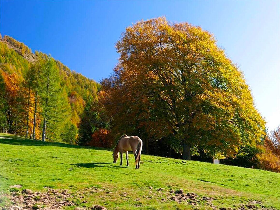Cavallo pascola vicino al parco divertimenti della Lombardia
