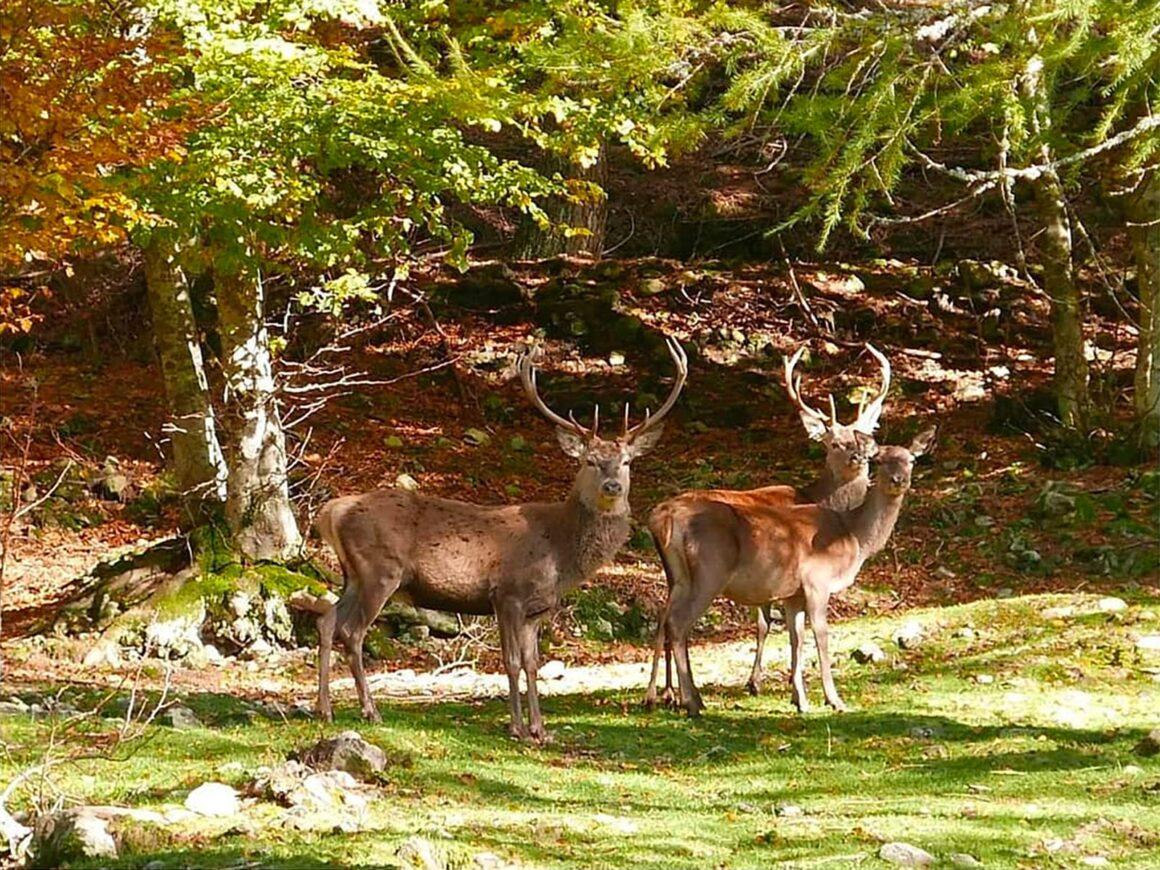 vicino al parco di Margno si vedono cervi e altri animali