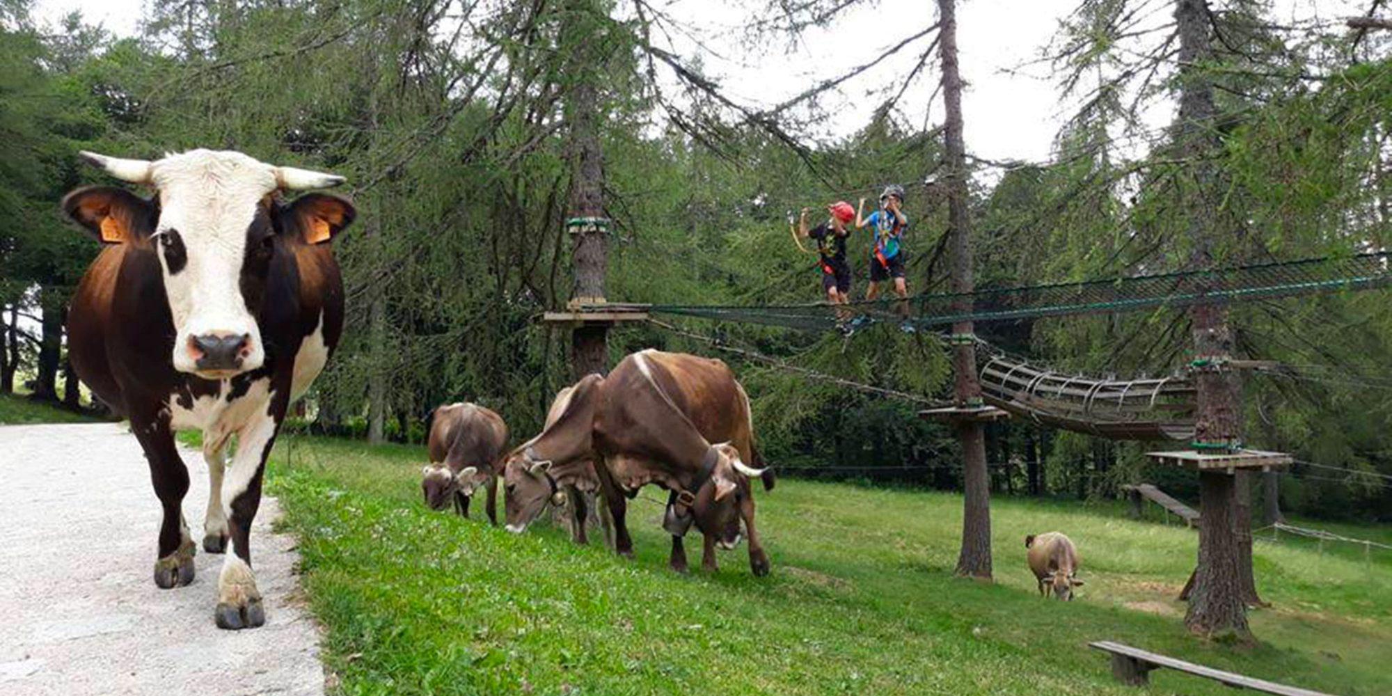 Mucche pascolano nei prati verdi del parco divertimenti vicino a Lecco