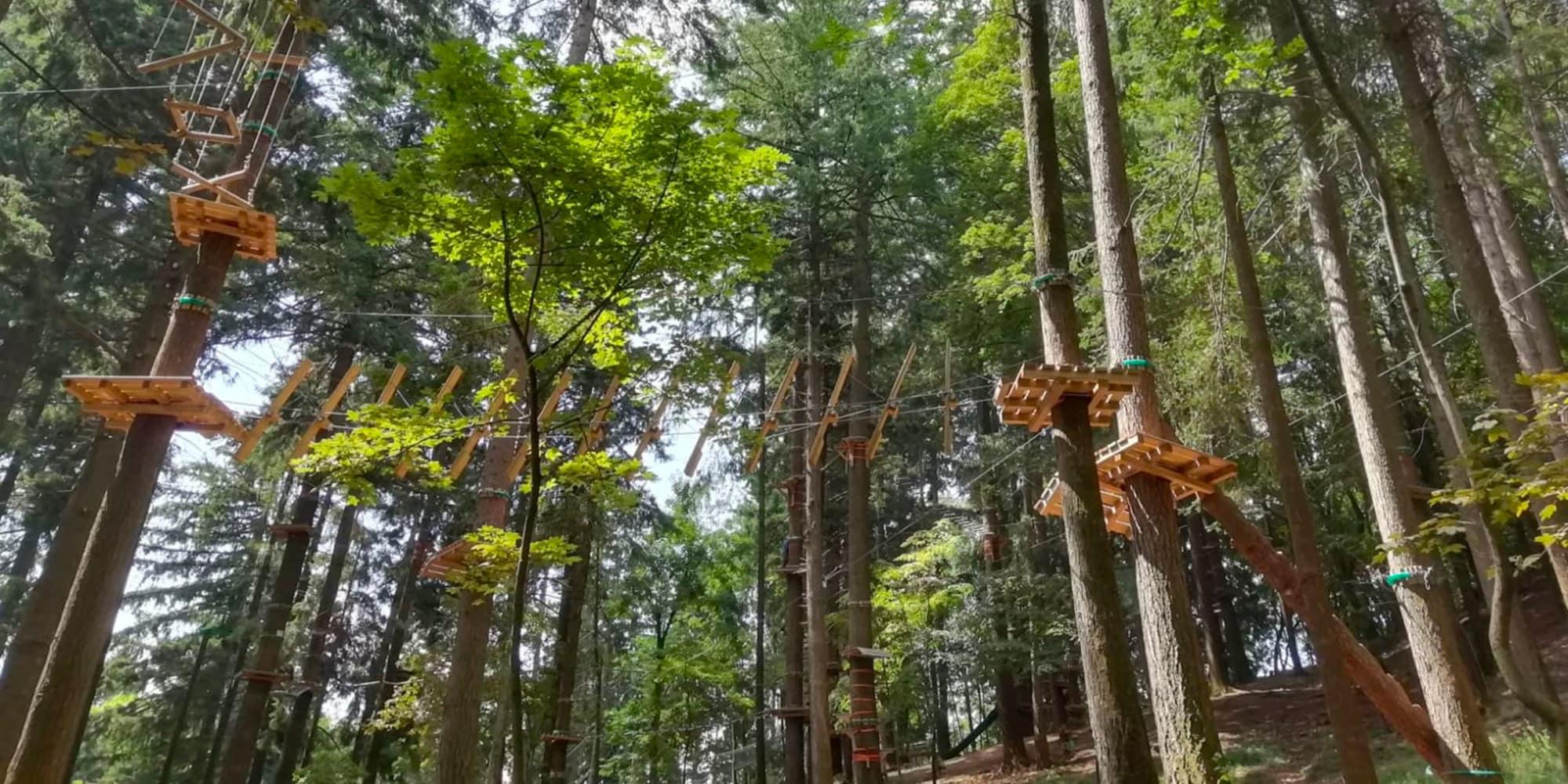 Percorsi tra gli alberi nel parco dell'Alpe del Vicerè