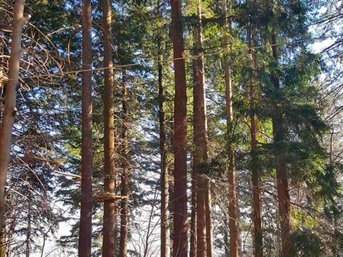 Creazione di percorsi avventura in boschi e parchi