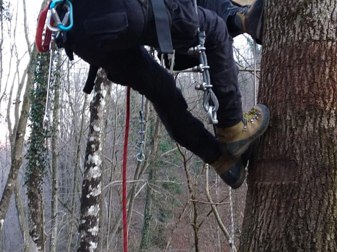 Tree climbers esperti costruiscono piattaforme